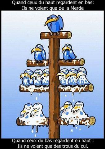 hierarchie_oiseaux